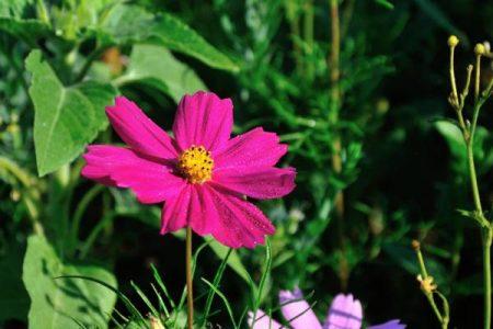 Tolle Nahaufnahme – taufrische Blume