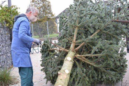 Irgendwie müssen wir den Baum anbinden?
