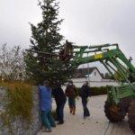 Schweres Gerät von Conny, viele erfahrene Baumaufsteller und schon steht der Viehberger Weihnachtsbaum. Danke an alle Helfer.